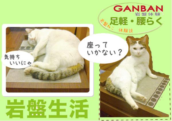 岩盤猫ちゃんPOP.jpg