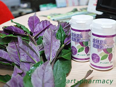 金時草&乳酸菌(乳酸菌パウダーサプリメント)
